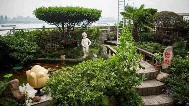 超美!老人用10年打造私享空中花园