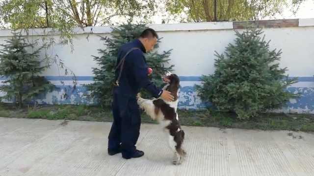 警犬凭衣物追踪200亩地,找到嫌疑人