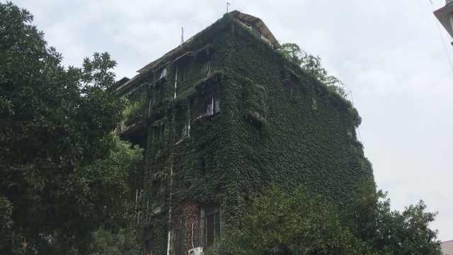最强避暑神器,18米绿植爬满整栋楼