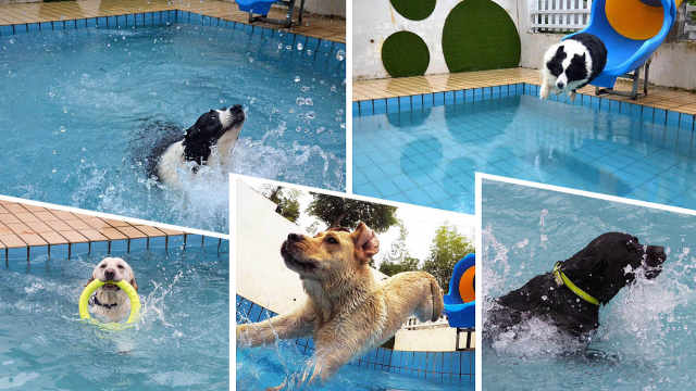 狗狗泳池趴,解暑乐翻天