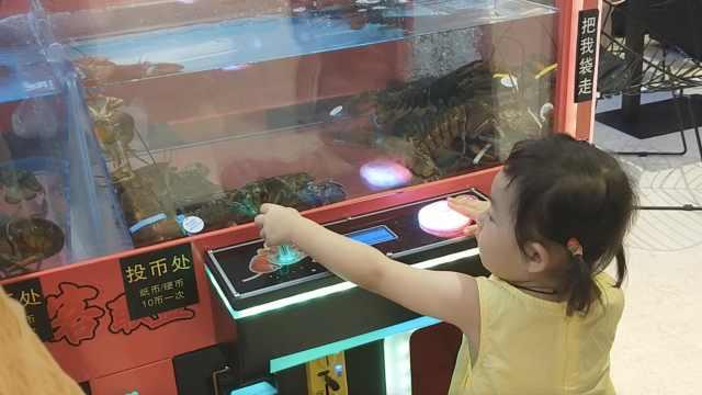 娃娃机抓真龙虾了解下!60元抓2只