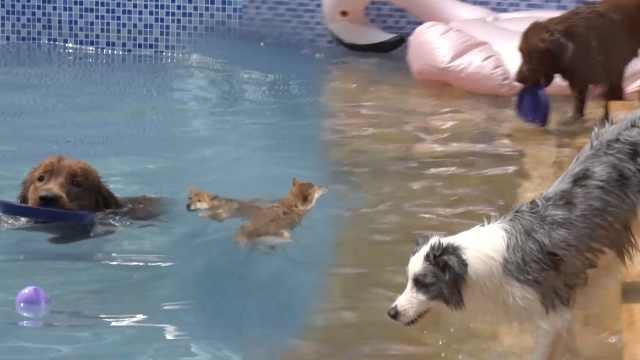 爱宠狂魔自挖泳池,狗友齐聚开轰趴