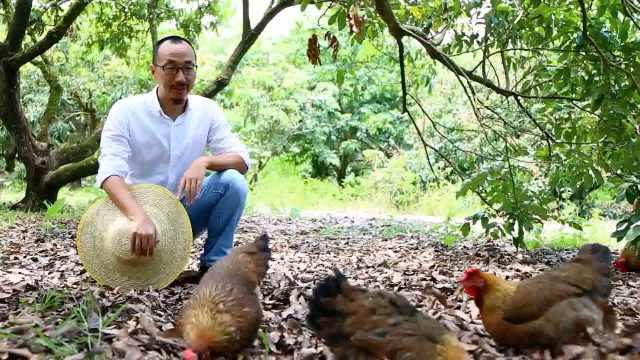 北大毕业生养鸡:孩子让我重新思考