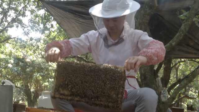 养蜂30年!三代人追花寻蜜四海为家