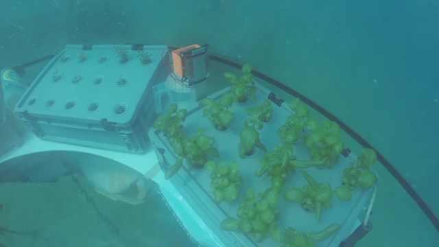 科学家在海底建水下植物园,超震撼