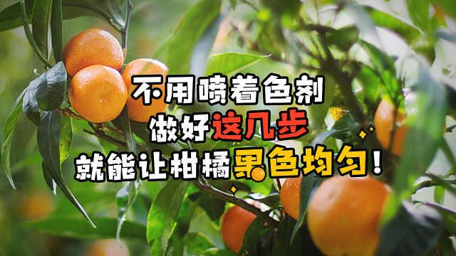 不喷着色剂,柑橘上色也能均匀!