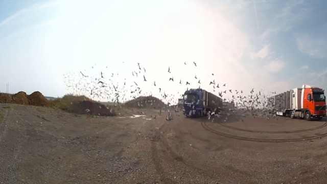 法国赛鸽大赛,2万只鸽子飞越500里