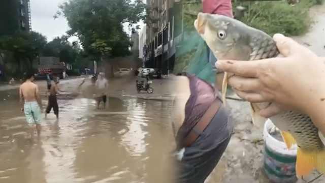 市民雨后街头捉鱼,一撒网捞满一桶