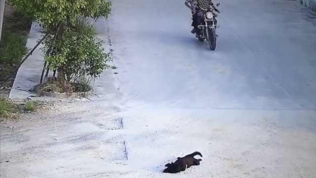 两男子疑用毒针射狗,狗狗5秒倒地