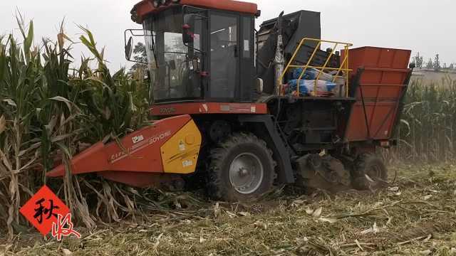 丰收季农机10分钟割1亩,村民抱娃等