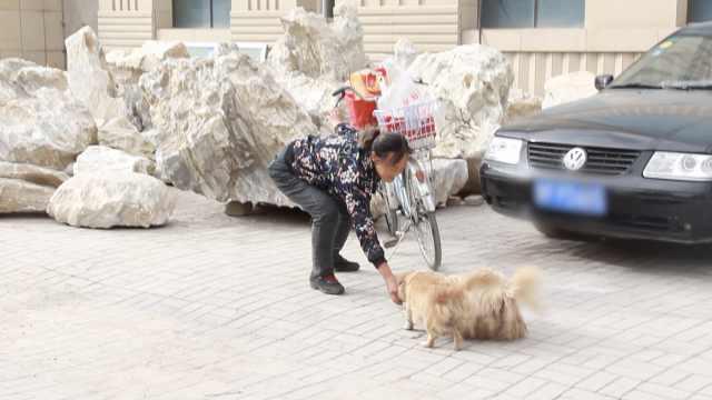 大妈每天骑行30里喂流浪狗:月花2千