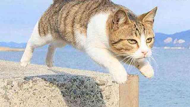 为什么有时猫从高处跳下不会摔伤?