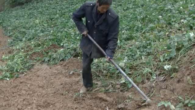 独腿大叔抡锄种地,捡砖为儿盖4间房