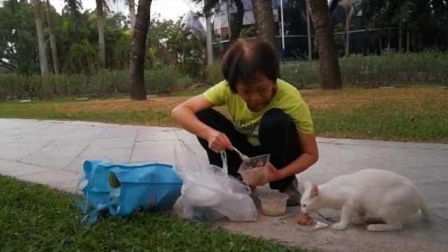 有鱼有肉!她十年每月花2千喂流浪猫
