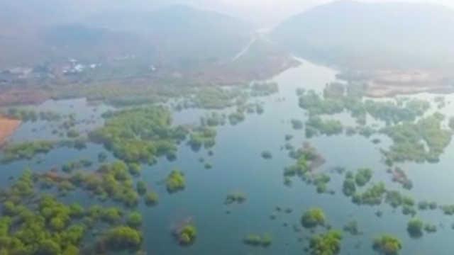 超美!崂山水库枯水期,现水上森林