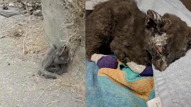 心疼!在火灾中奇迹幸存的小猫咪