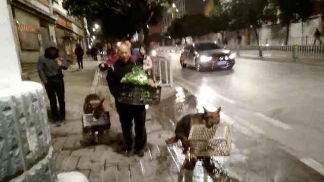 老人捡回2条狗,能帮收摊陪孙女玩