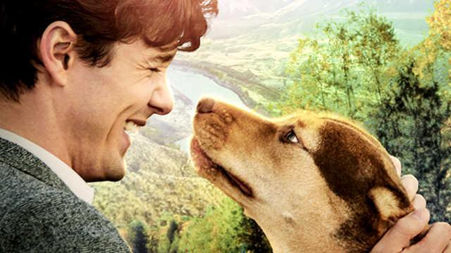 """这部狗狗的电影,唤起""""回家""""共鸣"""