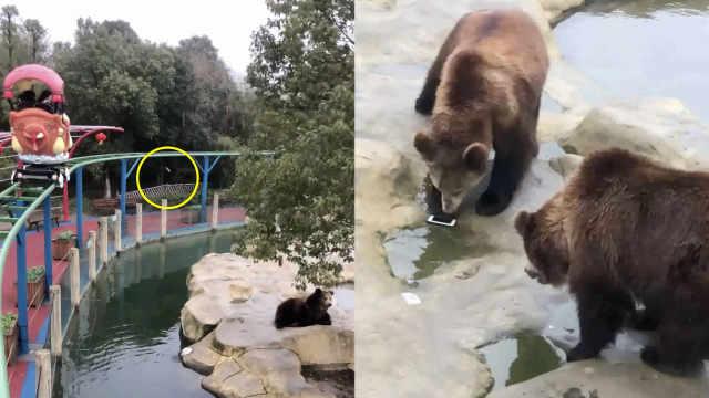 游客喂棕熊,误把iPhone手机当苹果