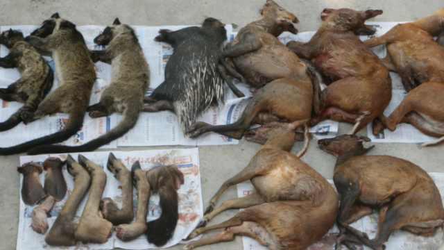 4人走私野生动物,老挝捕杀云南卖