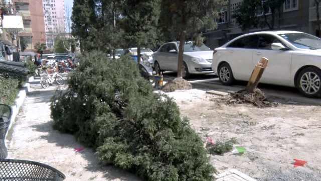植树节这小区却把树砍了,居民不满