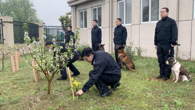 不会忘!民警携幼犬,祭扫警犬墓园