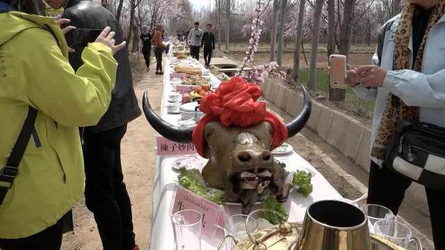 黄河边杏花开,500人共享百米长桌宴