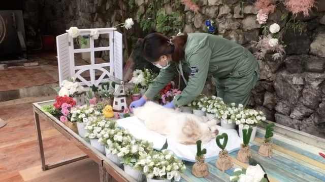 宠物殡仪馆设