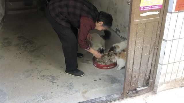 8旬老太喂流浪猫多年:老伴生前爱喂