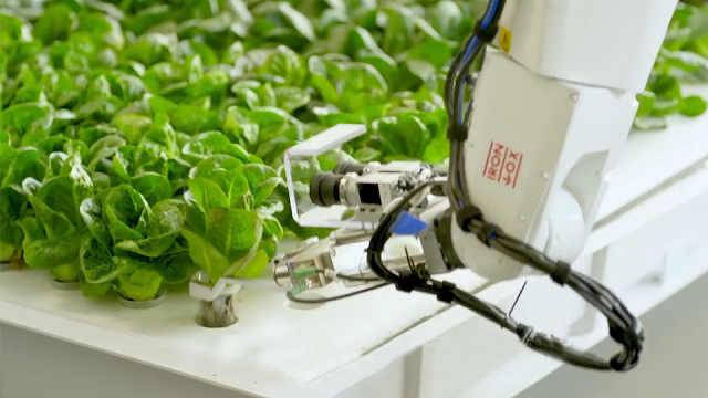 美国首个全自动农场,由机器人种菜