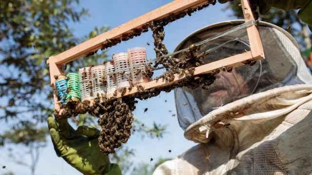 危机!巴西三个月内死亡5亿只蜜蜂