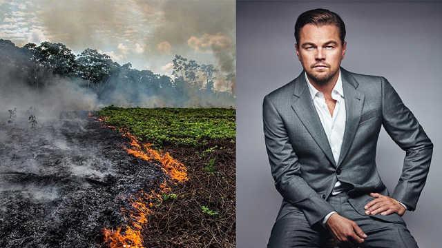 小李子环保组织将向亚马逊捐3500万