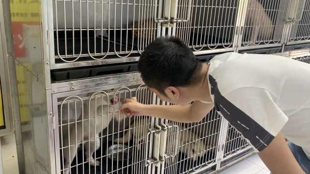 男子转行开宠物医院,6年救千条猫狗