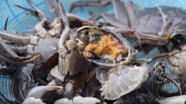 蟹塘从捞到吃1小时:提前1个月预约