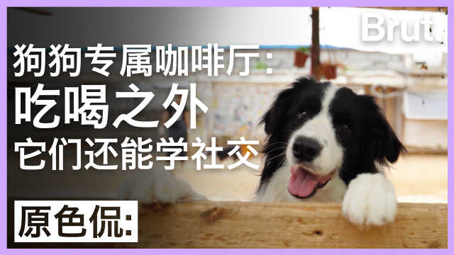 狗狗专属咖啡厅:吃喝之外还能社交