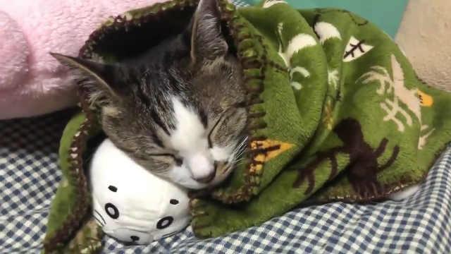天怎么突然这么冷,小猫抱紧小被子