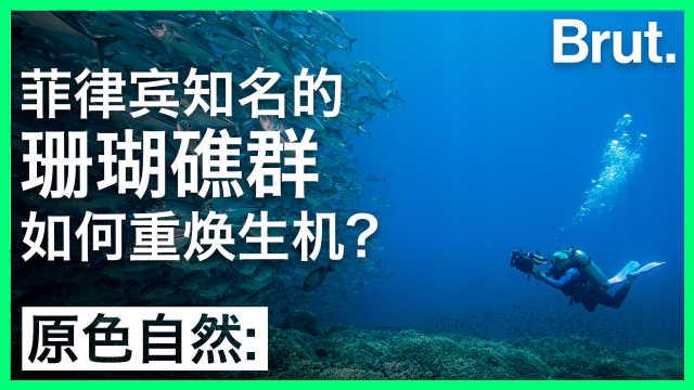 菲律宾知名珊瑚礁群如何重焕生机?