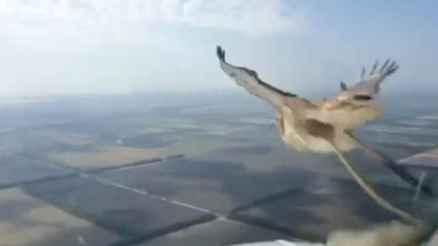 可怕!飞行员拍下鸟撞挡风玻璃瞬间