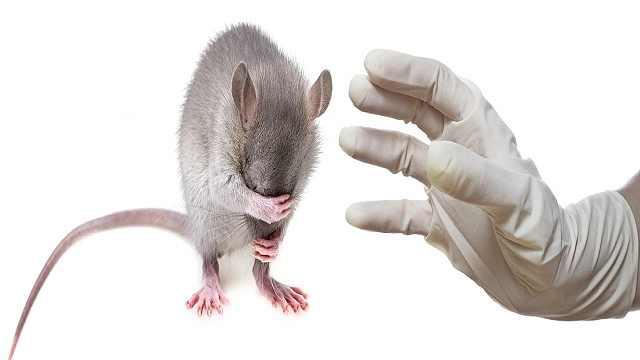 鼠疫防控小贴士已经为你准备好了
