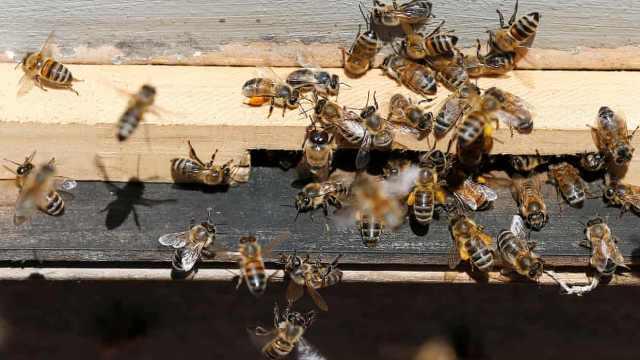 新报告:40%的昆虫物种将灭绝