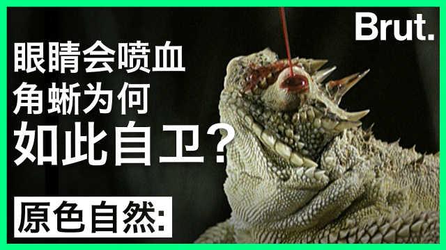 角蜥的眼睛为什么会喷血?