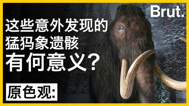 这些意外发现的猛犸象遗骸有何意义