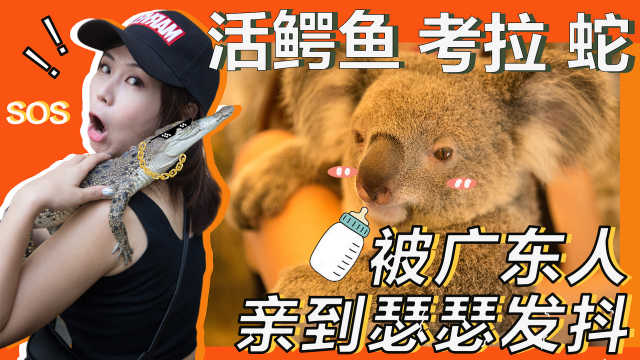 爱玛与澳洲巨鳄蟒蛇零距离接触!