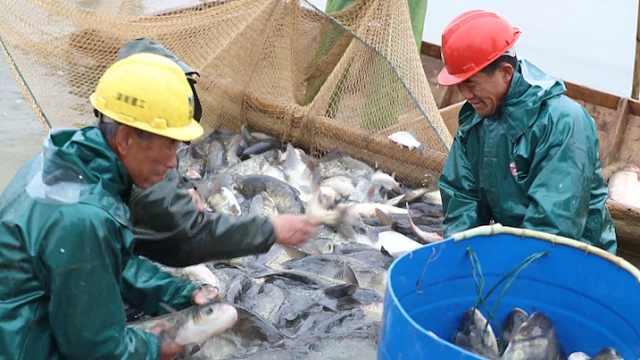 常德3000亩光伏发电养鱼:肥美又环保