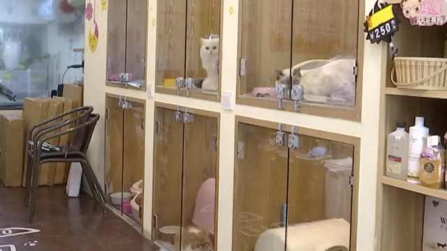 100元/天!春节宠物店寄养一位难求