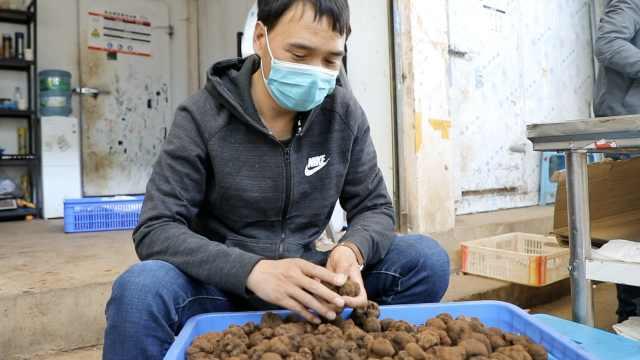 全球最大野生菌市场复工1个月:生意惨淡,国际销量基本为零