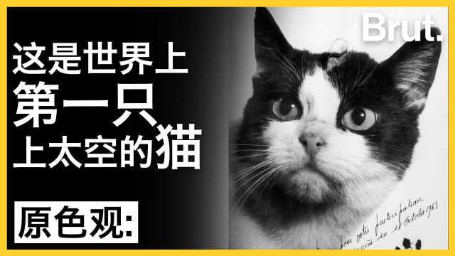 这是世界上第一只上太空的猫