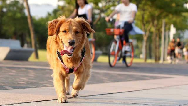 深圳立法禁食猫狗,你支持吗?