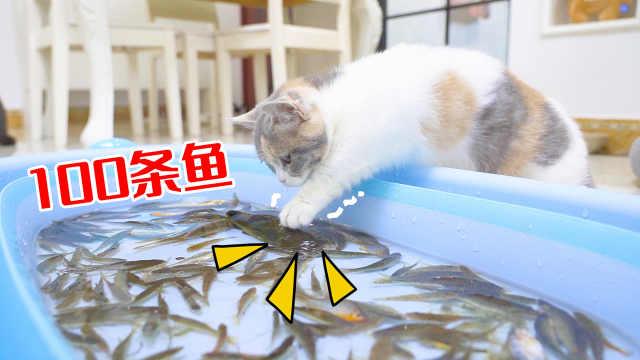给猫咪100条活鱼会怎么样?猫:全部叼走!