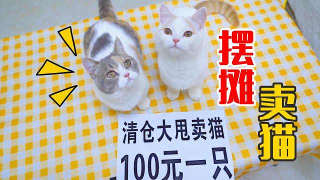 摆摊卖猫100元一只?会有人买吗?